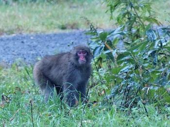 monkey-u.jpg