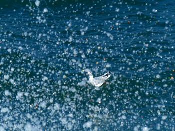 sea-gull.jpg
