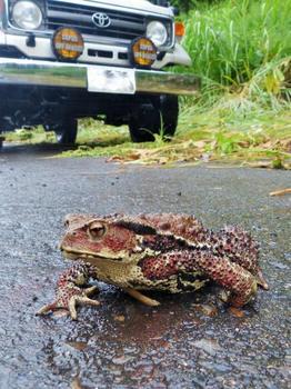 toad-u.jpg