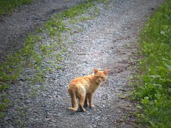 wildcat2.jpg